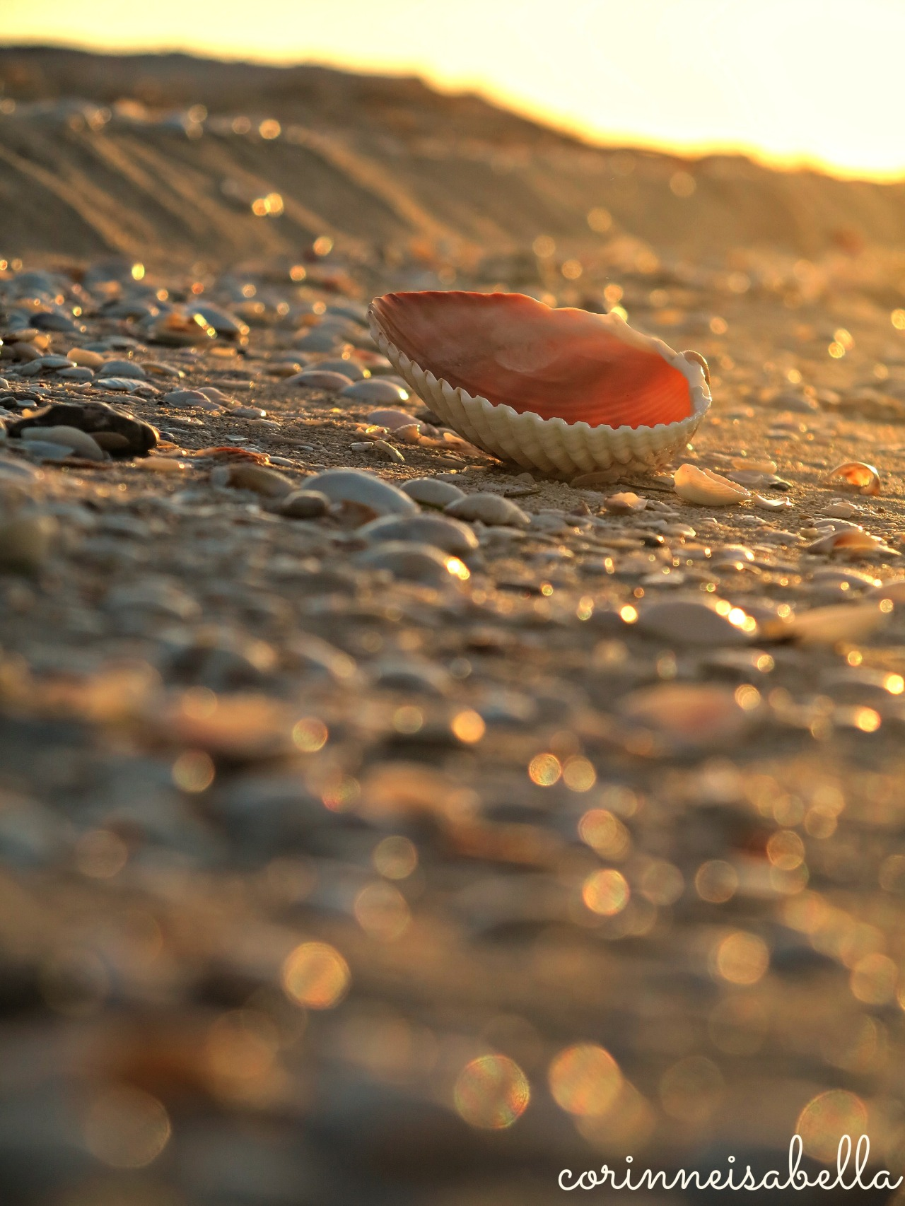 Seashell at dusk
